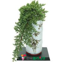 눈향나무B(백자분재)