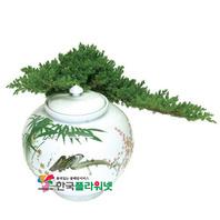 향나무A(백자분재)